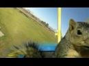 Esquilo pilotando aeromodelo ao som de Sweet Dreams