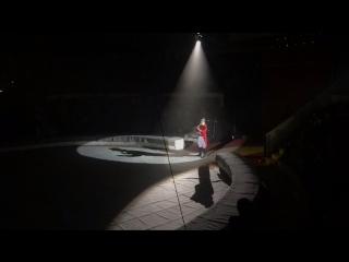 Неожиданное начало представления в цирке