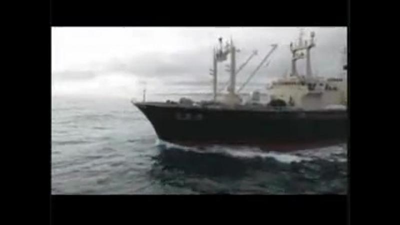 Whale Wars ~The Trailer (китовые войны)