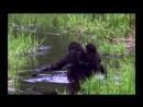 BBC Жизнь млекопитающих 10 Пища для размышлений Познавательный природа 2003