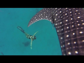 Потрясающе! GoPro Awards- Ocean Ramsey and a Whale Shark
