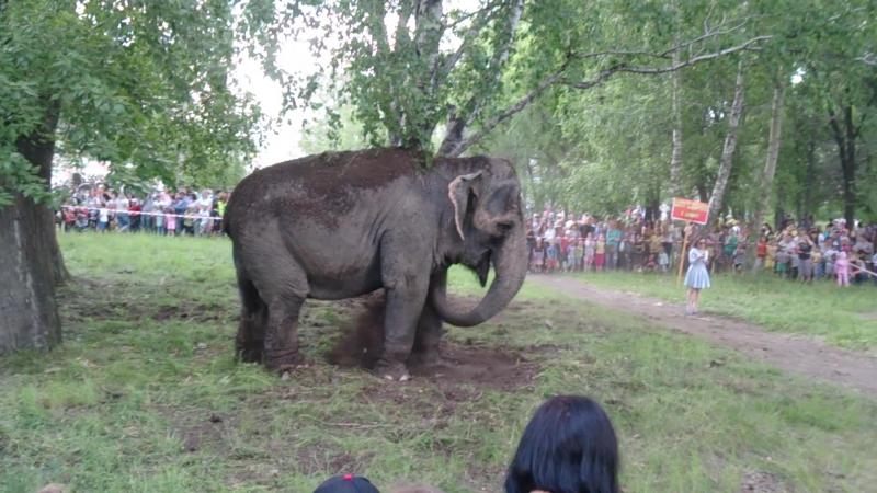 Пятитонные слонихи Дженни и Магда в Саду Победы 2