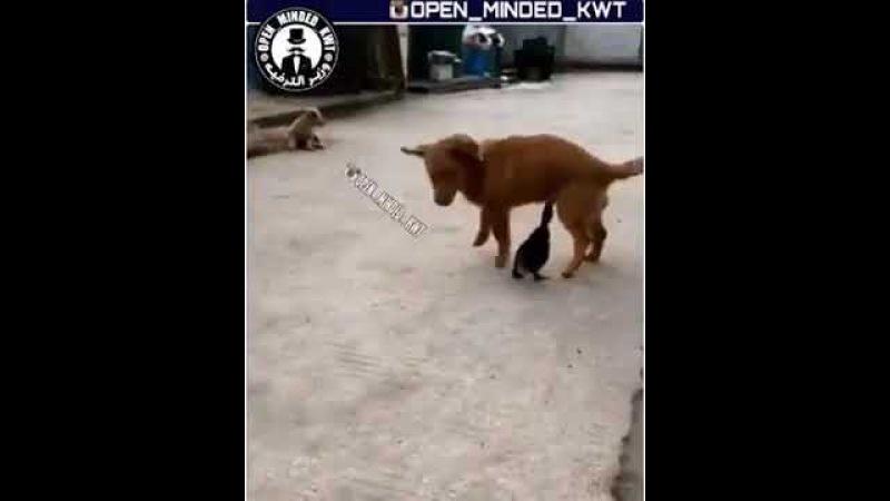 Утенок Клюнул за писюн собаки