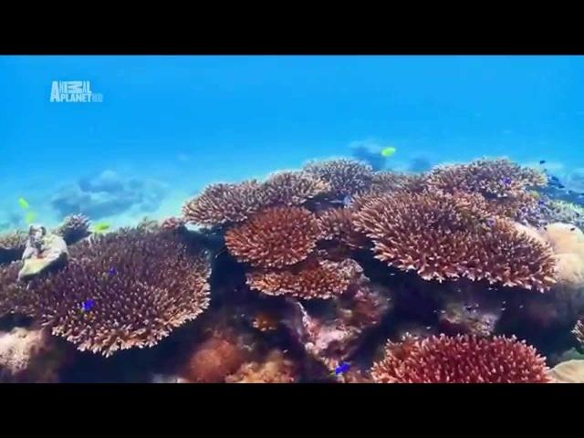 Чудеса голубой планеты Африка xeltcf ujke jq gkfytns fahbrf
