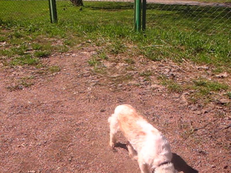 Собака Белка, 2 сезон , май, Белка ест траву