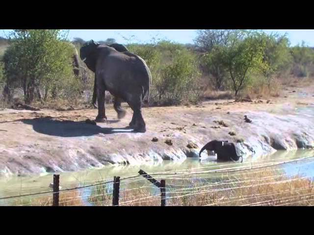 Elephant calf rescue at Madikwe Game Reserve