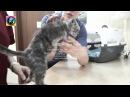 Спасение котёнка Гришы продолжение истории из приюта для животных Дари добро в Новосибирске