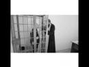 Тюрьма - Чёрный дельфин