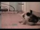 дуже смішне відео про котів