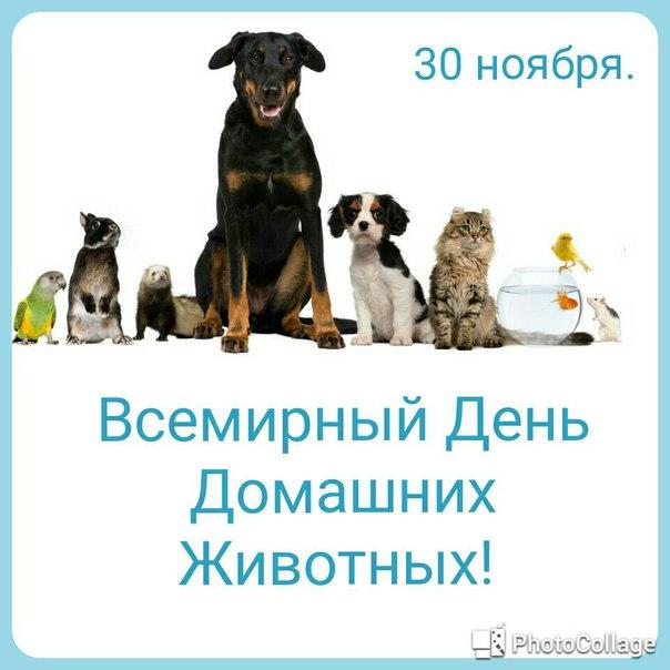 этого стримеры открытки день домашних животных всего оно получается