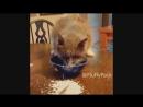 Классные приколы про животных. Смешная подборка с котами и кошками. Самые смешные видео online-video-cutter 4