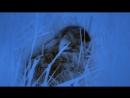 Документальный фильм BBC Британские Времена Года Зима The Great British Year 1 Winter 2013