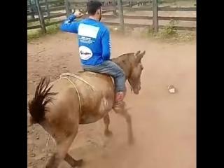 А конь не так-то прост...