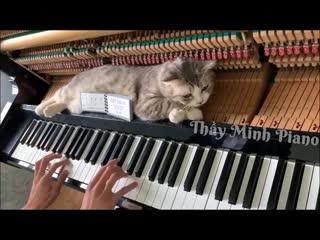 Кот спокойно спит внутри пианино, пока его хозяин играет музыку