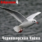 Обложка Улица широкая - Черноморская чайка