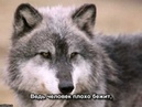 Волчонок А Маршал