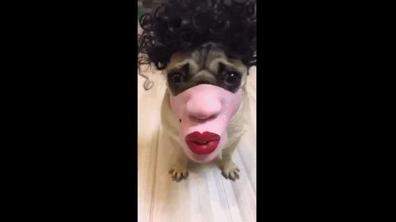 Собака в парике и в маске, копия бывшей в боевой покраске