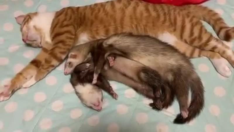 Ferret_hedgehog_chipmunk_cat_B0QGbJbne0r