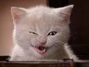 Смішні відео про котів №2