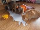 Приколы с котами, смешные кошки и котики, приколы про котов до слез – Funny Cats 2019