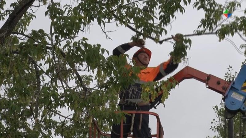 УГХ Лесного проводит обследование и обрезку зеленых насаждений