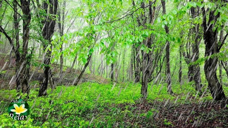 Шум дождя в лесу и Пение птиц - 10 часов сна и релакса