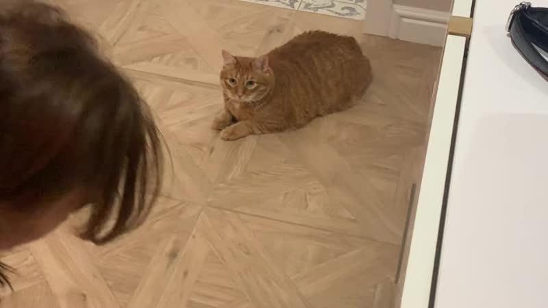 [TheBrianMaps] общаюсь с котом через кошачий переводчик