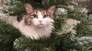 Кошка на ёлке декабрь 2018