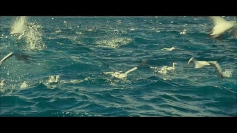Океаны. Охота дельфинов совместно с акулами (^^)