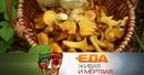 Главная польза лисичек все о треске и ее субпродуктах разница между дорогим и дешевым сахарным печеньем