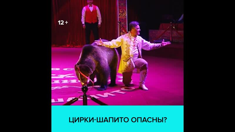 Безопасно ли ходить на представления цирка-шапито — Москва 24