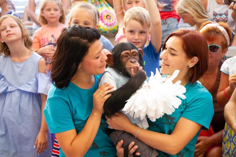 В Отеле Yalta Intourist отпраздновали День Рождения шимпанзенка Оскара