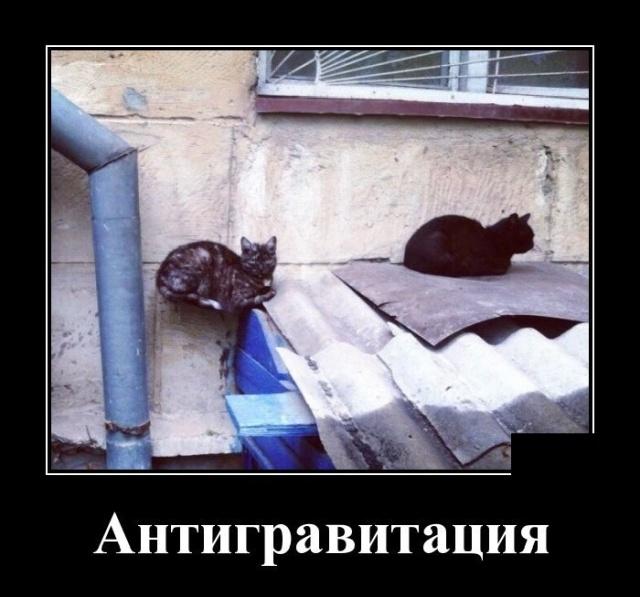 Демотиваторы