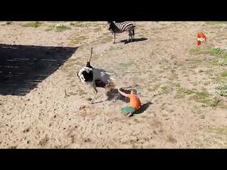 Страус напал на работника зоопарка в Пензе (РЕН.ТВ)