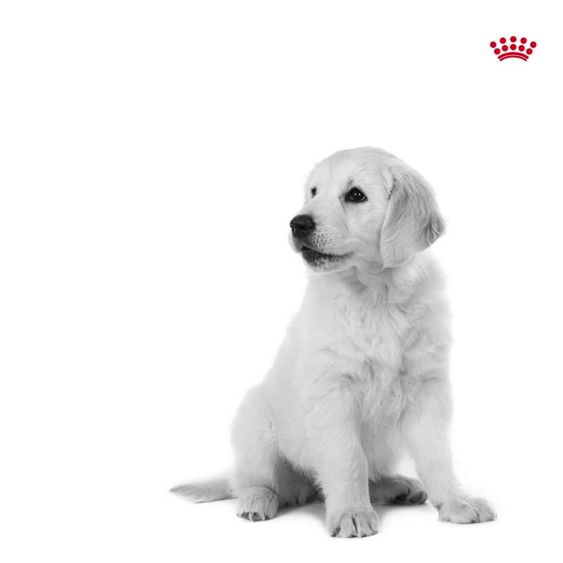 Новая линейка влажных кормов для собак