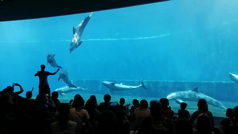 8 дельфинов ( 5 девочек и 3 мальчика) завершают показательные выступления в нижнем уровне АКВАРИУМА города Генуя( по - итальянс