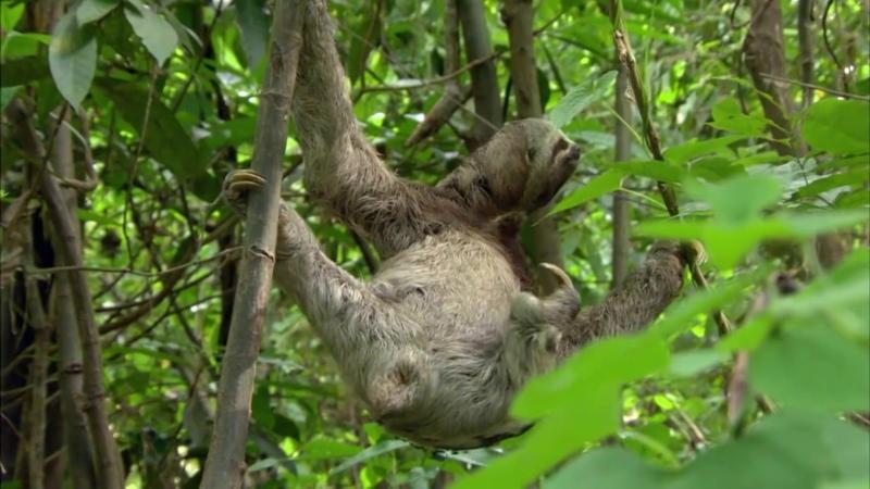 Амазонка В дебрях Латинской Америки Discovery Channel