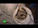 Историческая несправедливость: кости екатерининских солдат два года пылятся в гараже