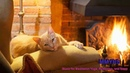 Cat Purring by the Fire Music for Meditation Yoga Relaxation and Sleep