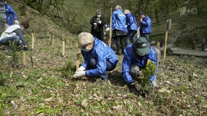 Более миллиона деревьев уже высажено врамках международной акции Сад памяти