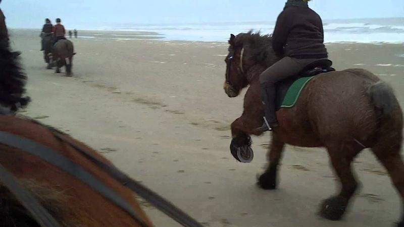 Belgische Trekpaarden onder het Zadel