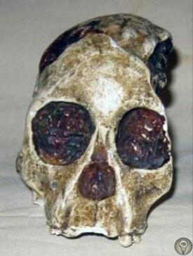 Загадочный череп В начале прошлого века, в 1924 году во время раскопок вблизи Южноафриканского поселка Таунг был обнаружен загадочный череп неизвестного ранее существа. Первым с необычной