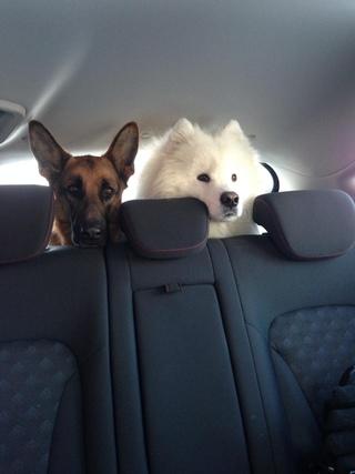 Все для собак южные ворота