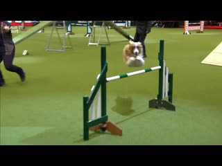 2. Agility Kennel Club British Open Final Part 2- Large - Crufts 2019