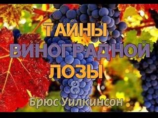 Б.УИЛКИНСОН - ТАЙНЫ ВИНОГРАДНОЙ ЛОЗЫ - 8 ЧАСТЬ