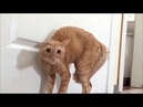 Try not to laugh TOP 16 funny cat jumps