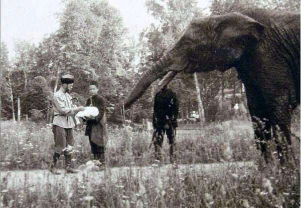 Один из слонов семьи Романовых