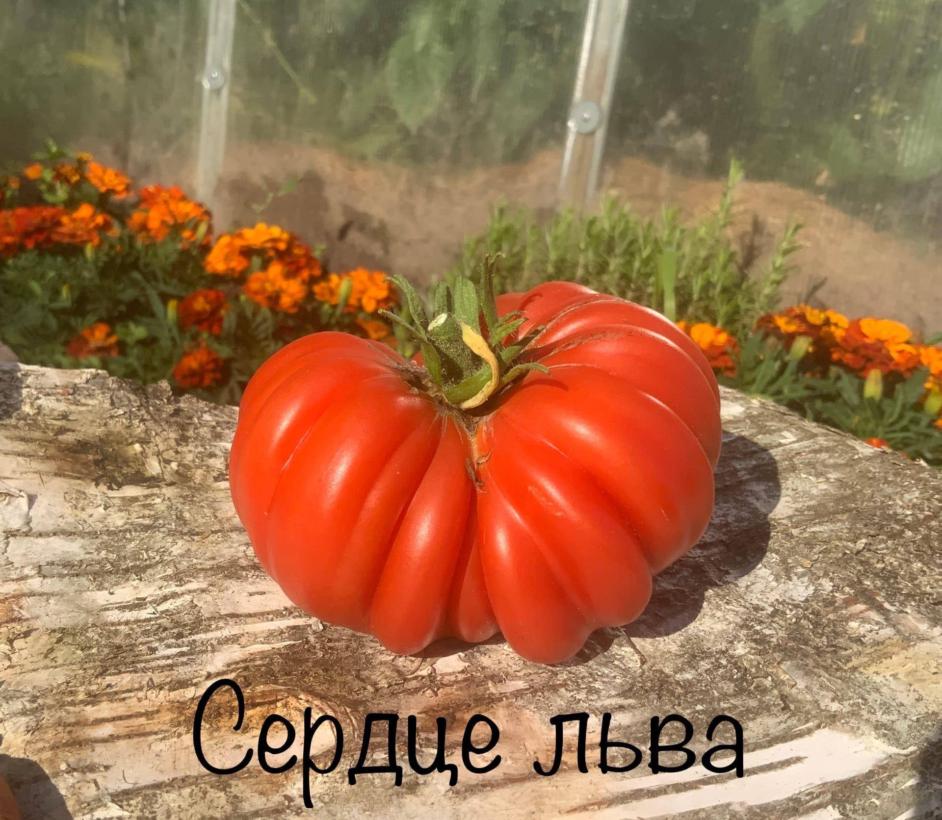 gCOp_XiEBUw.jpg