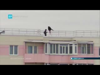 """""""Карлсоны"""" на крыше дома в Северодвинске"""