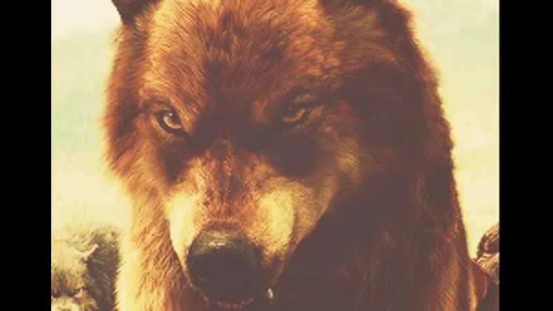 Джейкоб волк гифы